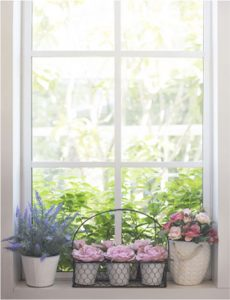Fenster Brandenburg